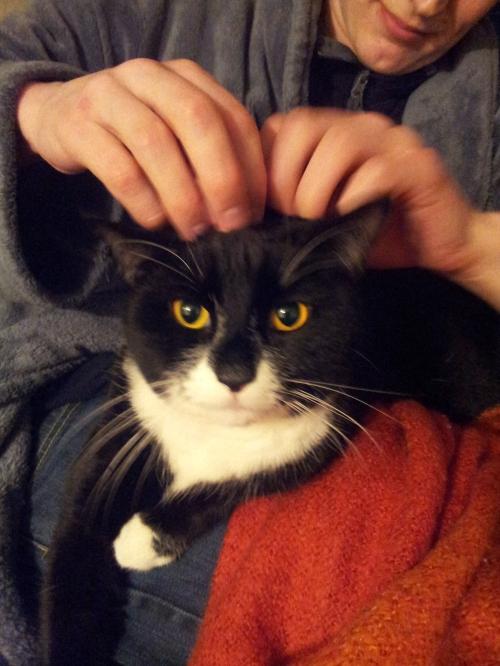 Foster kitty.